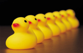 Get your ducks in a row!